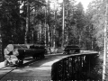 Holztransport: Waldbahn bei Kladanj (Bosnien und Herzegowina). Foto. Aufnahme um 1900.